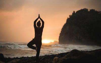 Yin & YangÉquilibrer nos énergies avec les saisonsTransformer le Feu de l'Eté vers la « detox » de l'Automne